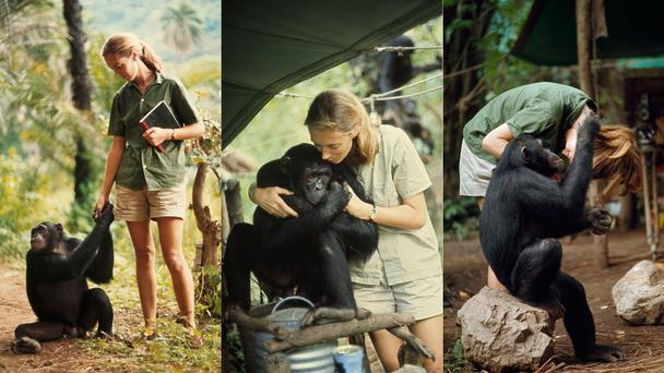 Friendship Park  >> Discovering Tanzania's chimpanzees – Carmen Rivero Colina