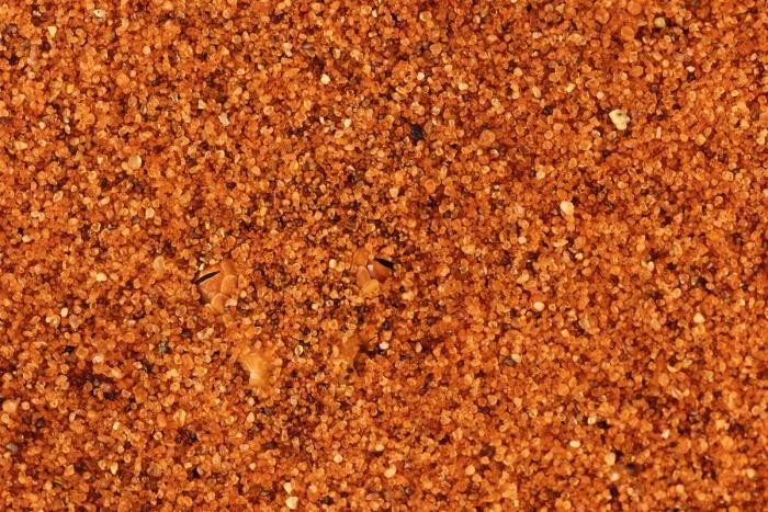 Víbora cornuda de color dorado, como la arena del desierto de Namibia, donde se entierra como si fuera una piscina para desaparecer de la ardiente superficie. Fotos cortesía de Art Wolfe
