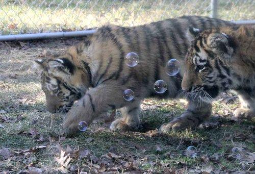 Photo Credit:  Minnesota Zoo
