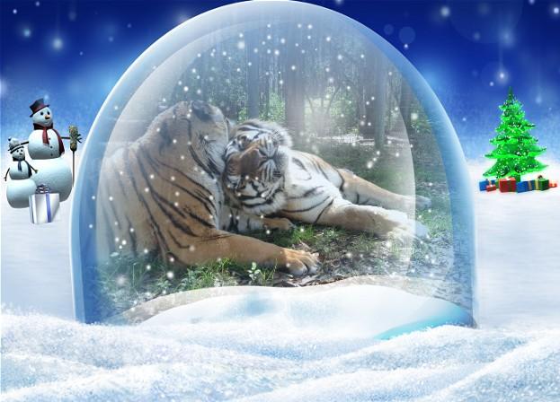 Navidad 3_