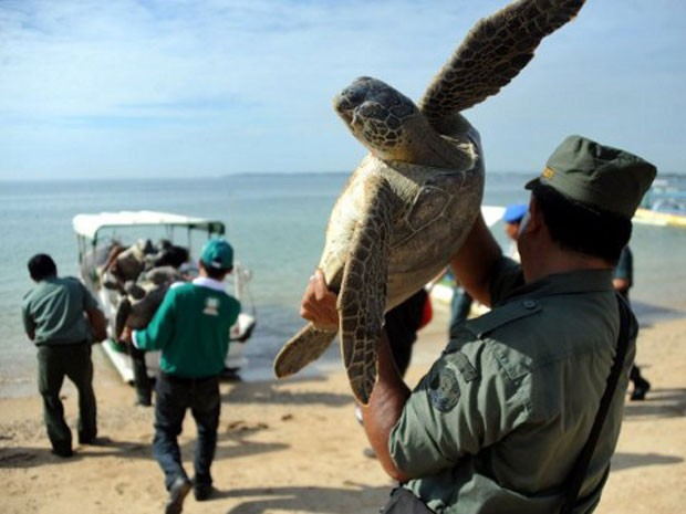 Militar carrega exemplar de tartaruga-verde que foi apreendido no último dia 10 na Indonésia (Foto: Sonny Tumbelaka/AFP)