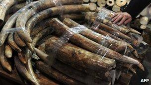 El apetito chino por el marfil ha elevado drásticamente el tráfico internacional de colmillos de elefantes.