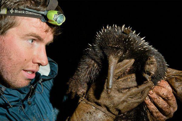Fotografía de Tim Laman, National Geographic