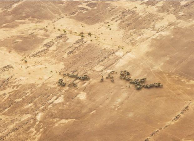 Elefantes africanos chegam a percorrer 32 mil km² em região desértica do Mali, sob temperaturas que chegam a 50 ºC (Foto: Divulgação/Chyulu Smith/Universidade de Oxford)