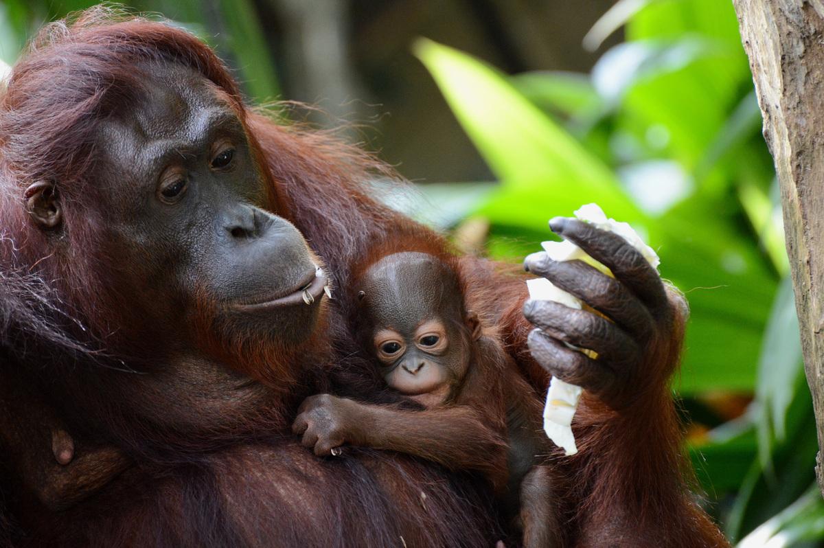Animal Photos Of The Week: Tapirs, Monkeys, Baby ...