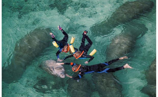 O Refúgio Nacional de Vida Selvagem de Crystal River é o único lugar nos Estados Unidos onde é permitido tocar nos peixes-boi. Para alguns, isso molesta os animais, e deve ser proibido