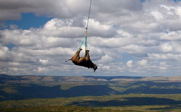 Foto: Green Renaissance / WWF