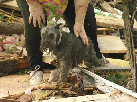 WATCH IT: Missing dog emerges from Oklahoma tornado rubble to reunite with owner - on live TV pix11.com/2013/05/21/mis…