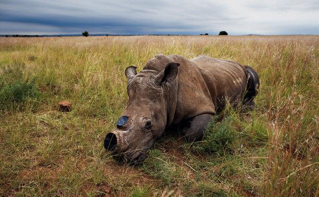 Foto: Brent Stirton