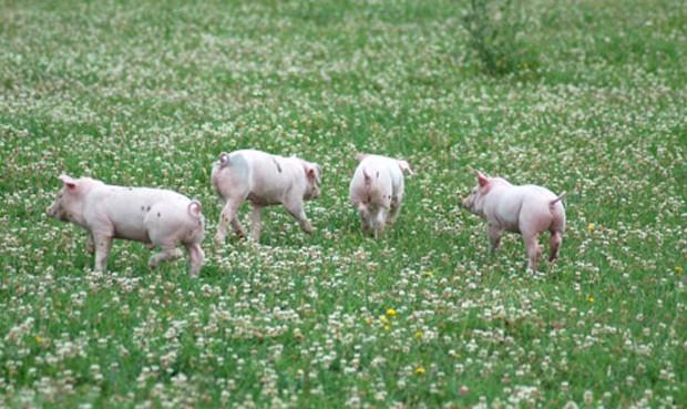 Farm Sanctuary/ Difusión