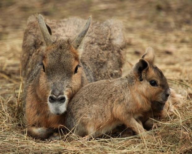 ©Cotswold Wildlife Park/Difusión