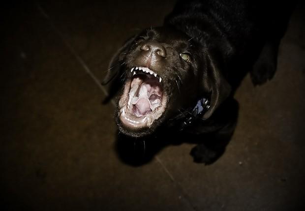 Además de sensaciones de enojo y frustración, los perros pueden demostrar sorpresa o incertidumbre con sus orejas. Neil Kremer/Creative Commons