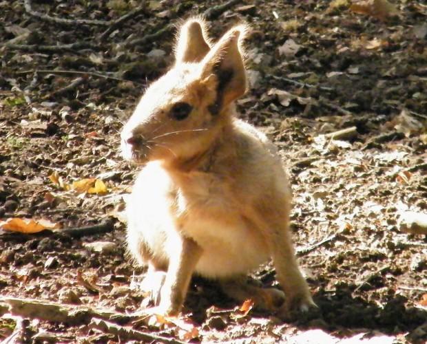 ©Cotswold Wildlife Park/Difusió