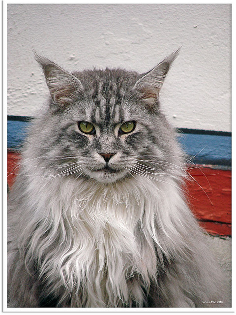 Flickr – Cat – Jorbasa