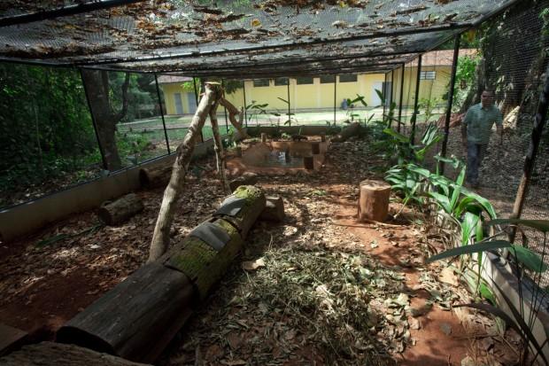 Recinto dos cachorros-vinagre no Parque Zoobotânico de Parauapebas, na Floresta Nacional de Carajás, Pará – Foto: João Marcos Rosa