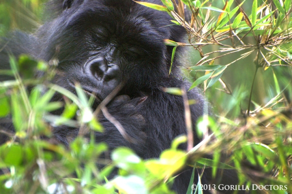 Izihirwa was observed picking at the wound on her left shoulder.