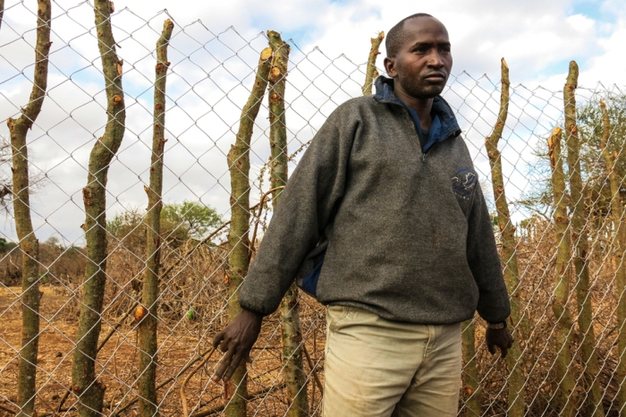 Maasai elder Lazaro Looyo installs fencing to his boma, which at night will keep lions and other carnivores away from his flock.