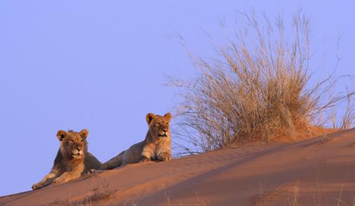 Photo: Central Kalahari Reserve