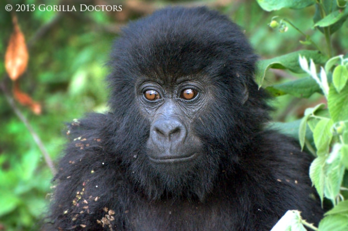Matabishi, at the time of his rescue in late June, was covered in burrs and in poor condition.