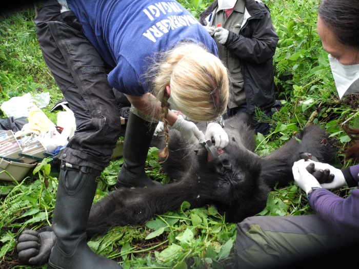 Dr. Dawn examines 17-year-old Kanama, who had a swollen tongue, preventing her from feeding.