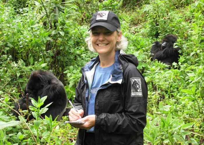 Dr. Jan conducting a routine health check of a wild mountain gorilla group.
