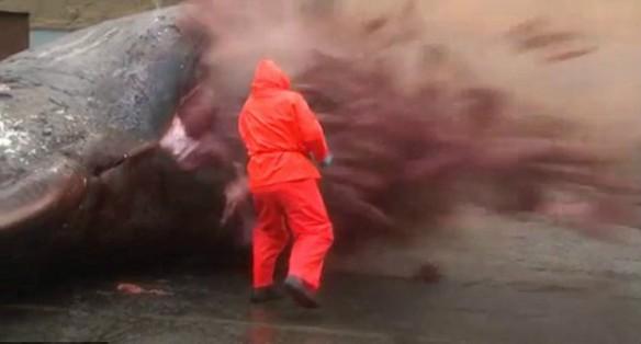 Baleia explosiva – Reprodução/Youtube