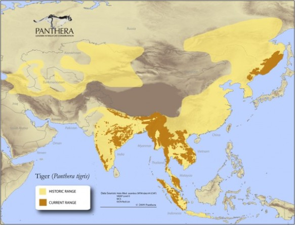 Most wild tigers now survive only in protected areas. The current challenge is how big cats and humans can share the landscape in ways that allow tigers safe passage between reserves to hunt and breed, while preventing deadly contact with people. (Map courtesy of Panthera)