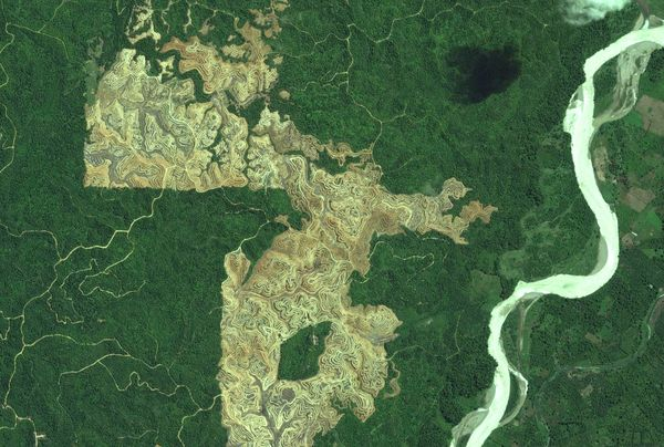 Satellite images of tree plantations (pictured above) in Sumatra, Indonesia, help identify threats to tiger habitats. PHOTOGRAPH BY DIGITALGLOBE .