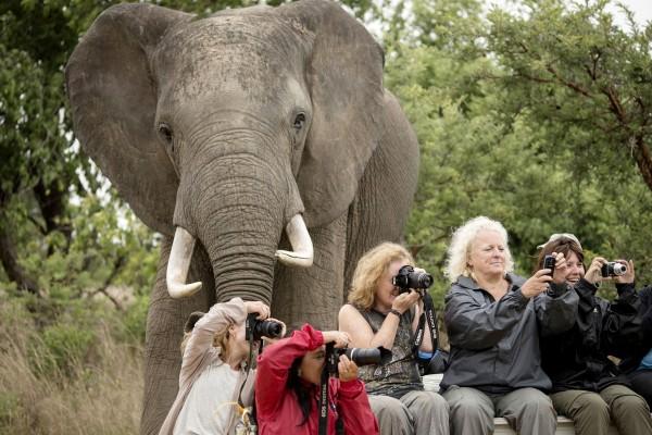 The elephant photobomber. Photograph by Marcus Soderlund, Barcroft Media/Landov