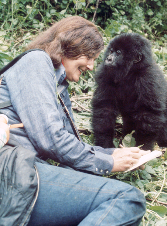Beautiful photo by Ian Redmond of Dian Fossey with Poppy, as an infant.
