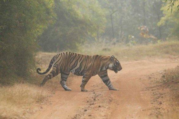 Pushpraj - a threat? Still too young to be a serious contender for Vijaya's affections. (c) Satyendra Tiwari