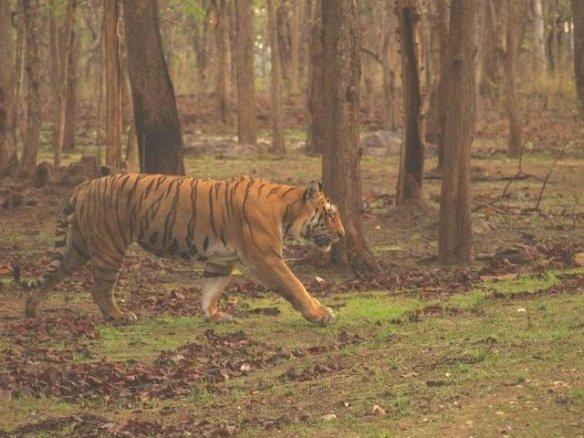 Sula ID Right flank (c) Sajith Ponnappa