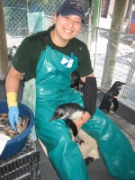 Lana Vanagasem, manager of penguins and sea otters, Shedd Aquarium feeding a penguin chick