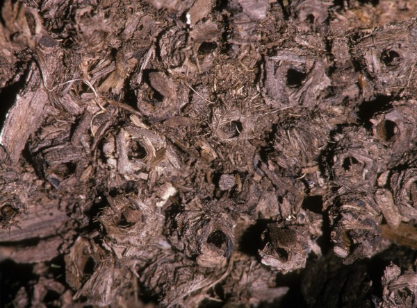 A nest of caddisfly larvae sits on a stream bottom. Photograph by John T. Fowler, Alamy