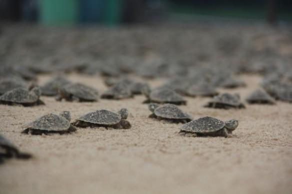 Photograph by C. Ferrara/Wildlife Conservation Society