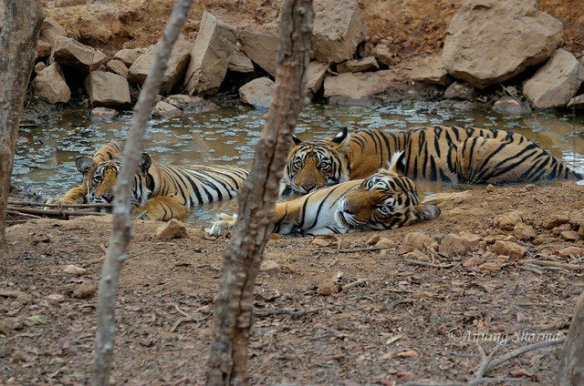 Unnis and her young sons cool off in 47 degree heat in 2012 (c) Anurag Sharma