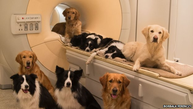 Pet dogs took part in the MRI scanning study