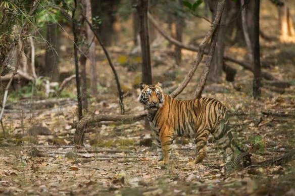 Pushpraj - The young pretender with an eye to the main chance (c) Satyendra T