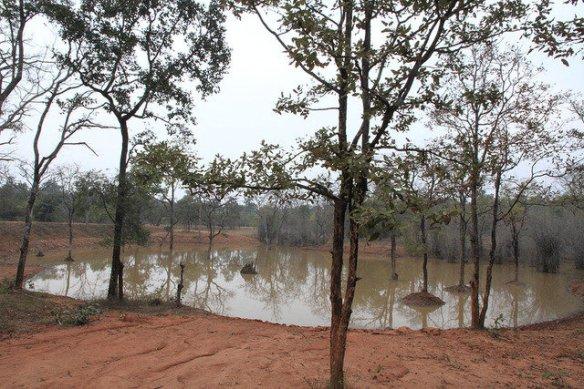A watering hole in Khitauli. (c) Anand Madabhushi