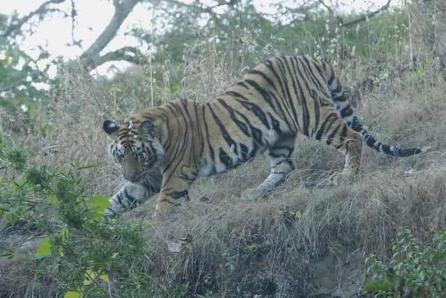 Somanshu (V2) ID Left Flank (c) Kay Tiwari