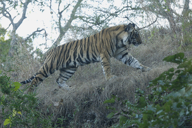 Somanshu (V2) ID Right Flank (c) Kay Tiwari