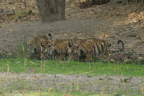 The family of three drink together side by side. April 2012 (c) Kay Hassall Tiwari