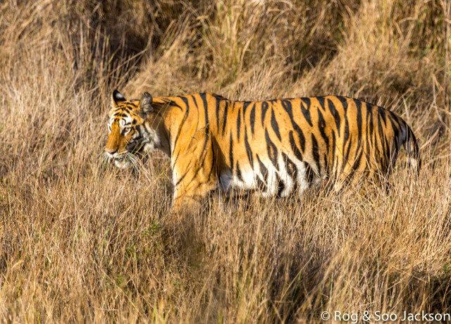 Wakeeta in Bhitri meadow on 20th March (c) 2014