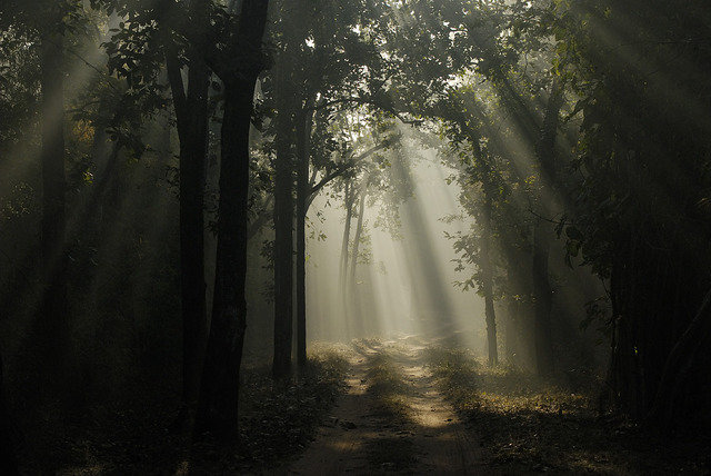 A Bandhavgarh winter. A misty Magdhi zone forest in the middle of winter (c) Kay Hassall Tiwari