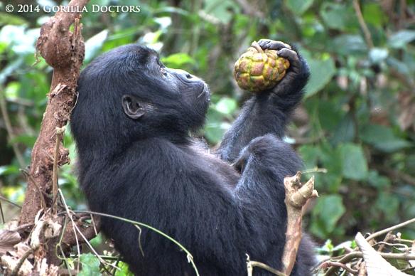 Photo: Gorilla Doctors Blog