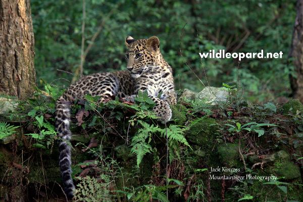 You can help by buying images of Asa, the Leopard of Hope HERE. Images start at just $5