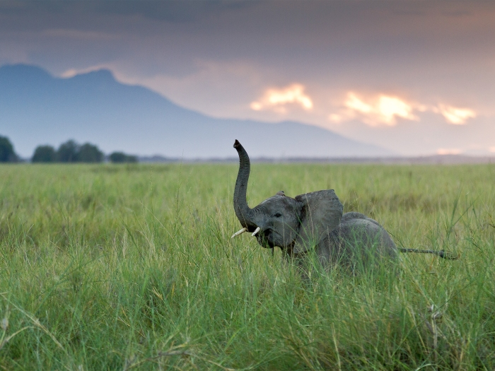 A young African elephant in Amboseli, Kenya. Photograph by João Nuno Gonçalves, National Geographic Your Shot