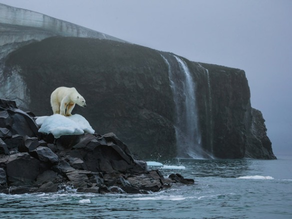 Photograph by Cory Richards A polar bear stands sentinel on Rudolf Island in Russia's Franz Josef Land archipelago, destination of a multidisciplinary scientific expedition in the summer of 2013.