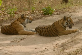 T8 on right with his mother Tulsi (c) 2014