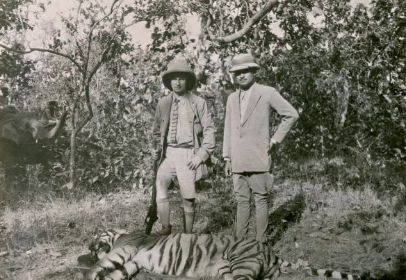 THE AUTHOR'S BIGGEST TIGER—10 FEET 4 INCHES BETWEEN PEGS The great beast was shot less than 2 miles from the Maharaja's palace at Ambikapur. Beside General Mitchell stands his host, the Maharaja of Surguja. PHOTOGRAPH BY BRIG. GEN. WILLIAM MITCHELL, NATIONAL GEOGRAPHIC